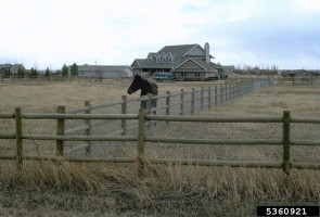 Picture of wood pole fence for horse pasture/corral