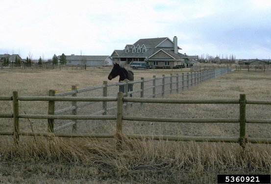 6 Tips for Small Acreage Horse Farms