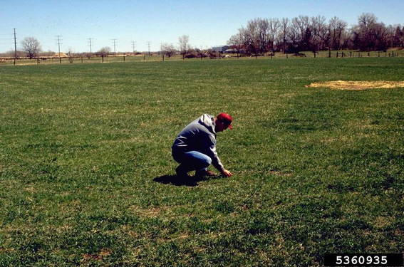 Picture of pasture inspection