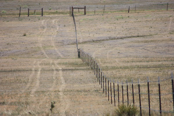 Picture of newly installed cross-fencing for enhanced grazing management