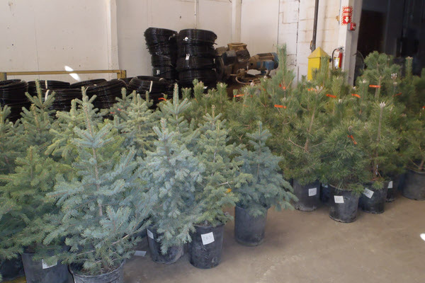 Picture of potted trees and drip irrigation supplies from annual tree program.