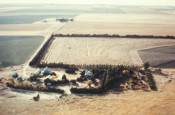 Aerial view of multiple windbreak rows