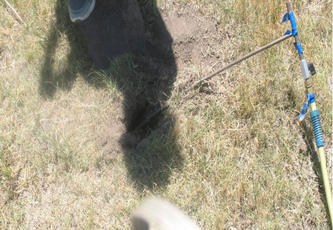 Picture of PERC treatment rod/prairie dog burrow
