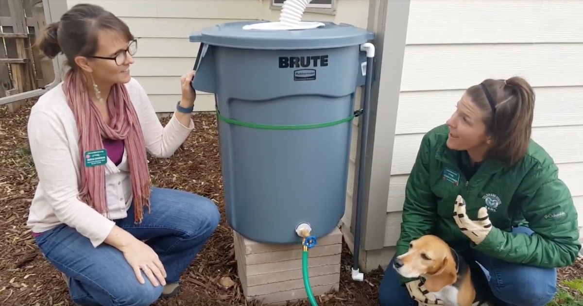 Diy rain barrel installation double el agate cd for Diy small rain barrel